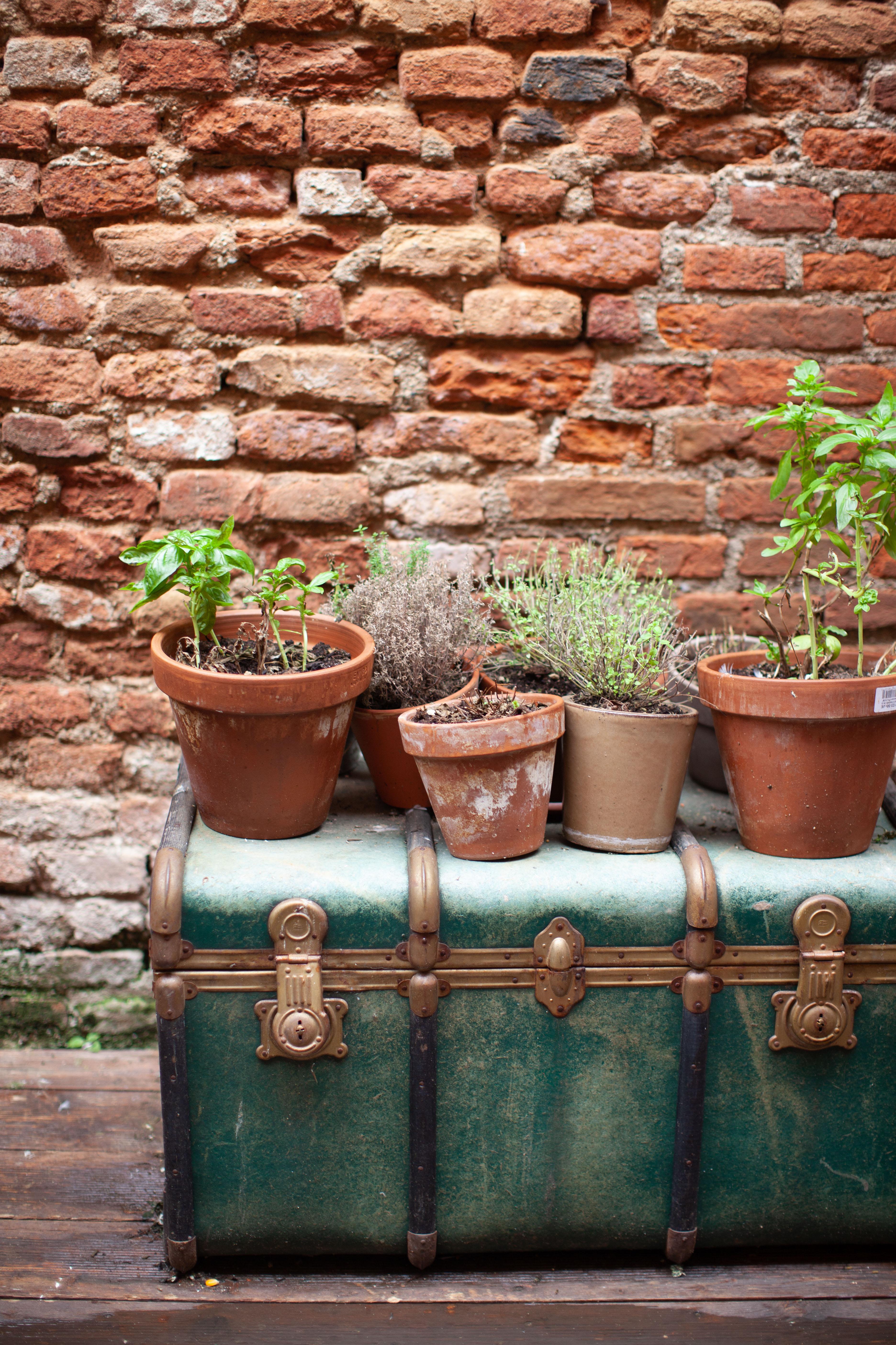 ingresso esterno baule piante aromatiche