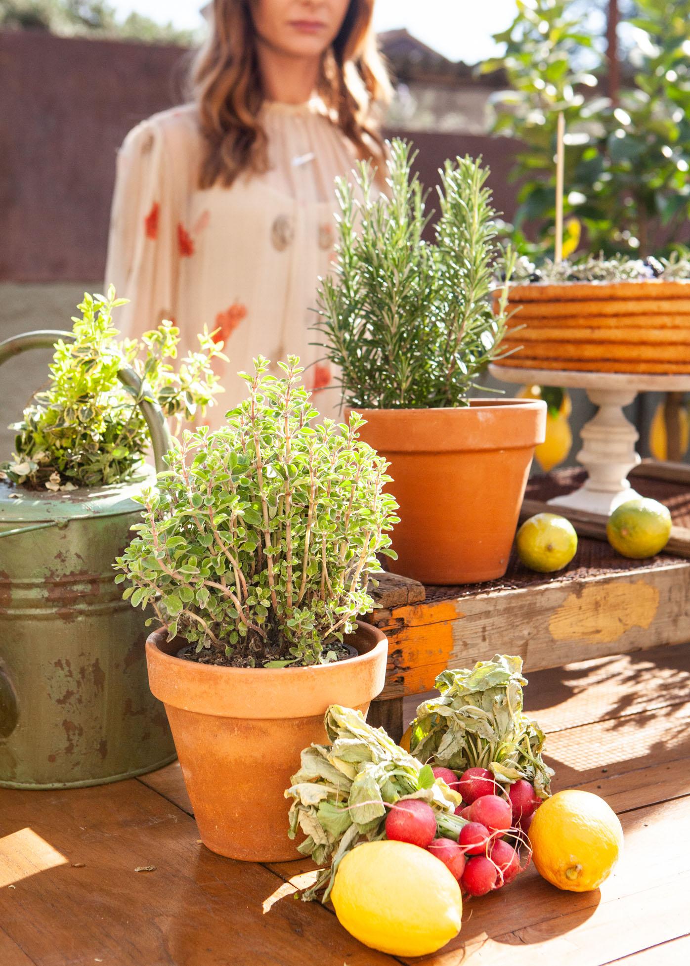 Erbe aromatiche frutta verdura
