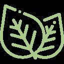 foglie verde herb